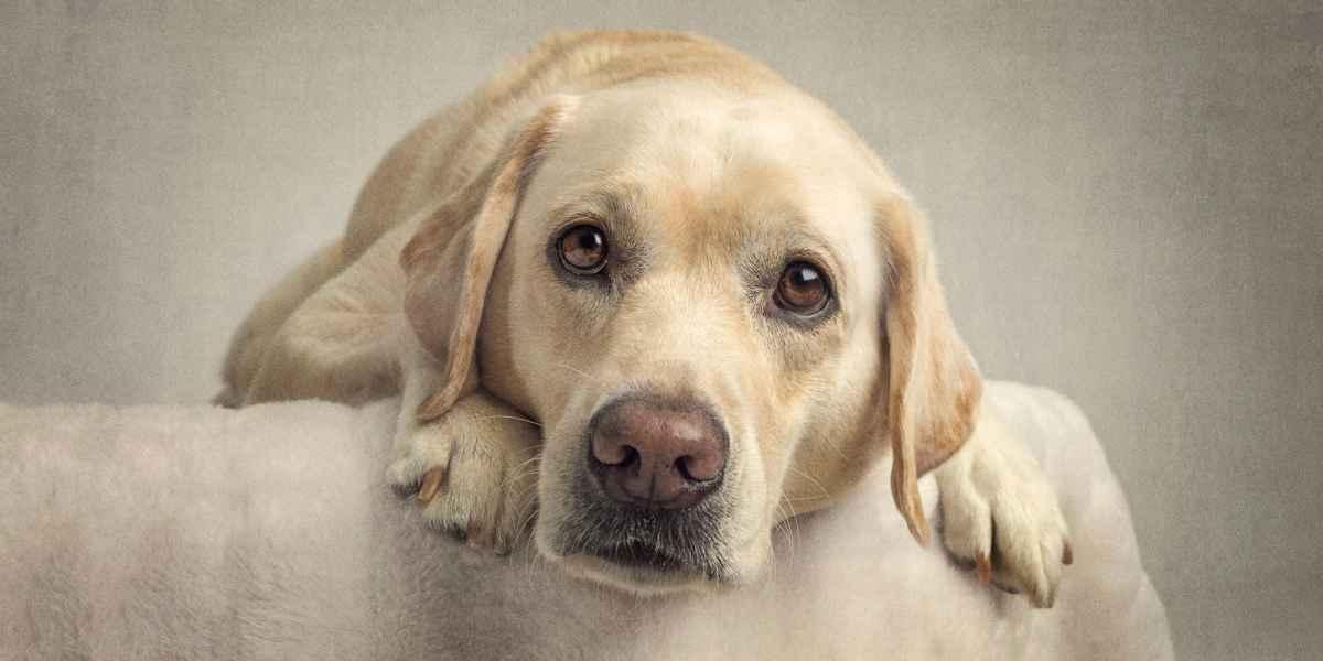 Pet & Animal Photography